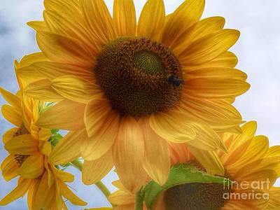 Photograph - Sunflower Dither  by Susan Garren