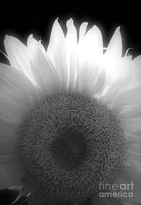 Photograph - Sunflower Dreams Bw by Chalet Roome-Rigdon