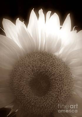 Photograph - Sunflower Dreams Sepia by Chalet Roome-Rigdon