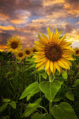 Sunflower Dusk Art Print by Debra and Dave Vanderlaan