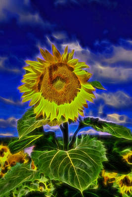 Photograph - Sunflower Electrified by Allen Beatty