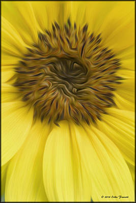 Photograph - Sunflower by Erika Fawcett