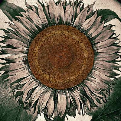 Sunflower - Face To The Sunshine Art Print by Patricia Januszkiewicz