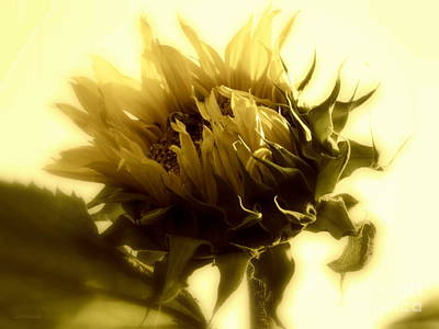 Photograph - Sunflower - Fare Thee Well by Janine Riley
