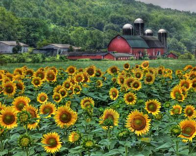 Barns Digital Art - Sunflower Farm by Lori Deiter