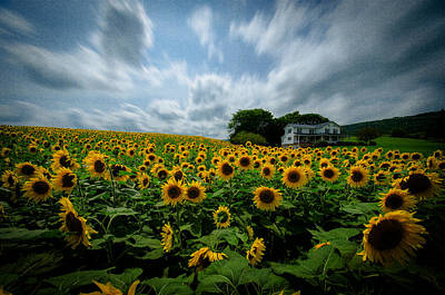 Photograph - Sunflower Field by Crystal Wightman