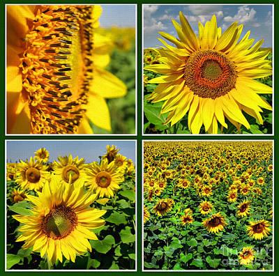 Photograph - Sunflower Field  by Daliana Pacuraru