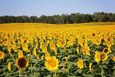 Photograph - Sunflower Field  by Deb Buchanan