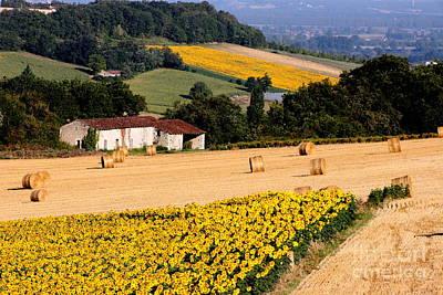 Sunflower Field Original
