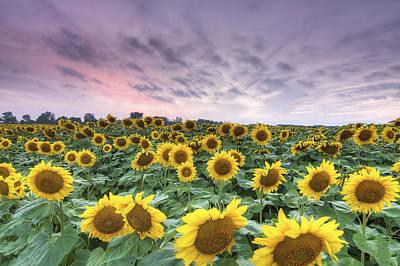 Sunflower Photograph - Sunflower Field by Nick Seman