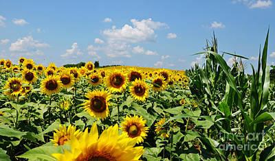 Photograph - Sunflower Field by Paul Mashburn