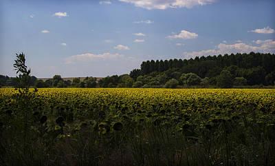 Photograph - Sunflower Field by Radoslav Nedelchev