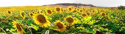 Photograph - Sunflower Field by Weston Westmoreland