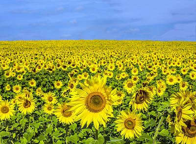 Sunflower Field Art Print