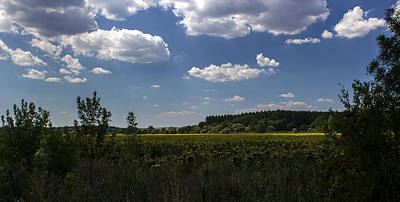 Photograph - Sunflower Field With Cloudy Blue Sky by Radoslav Nedelchev
