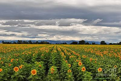 Photograph - Sunflower Fields by Nancy Chambers