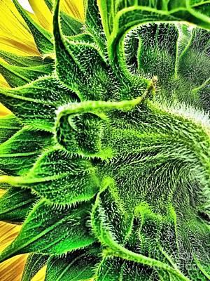 Fuzzy Digital Art - Sunflower Fuzzy Back by Margaret Newcomb