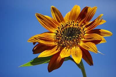 Gabii40 Photograph - Sunflower by Gabi Siebenhuehner