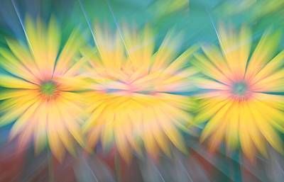 Photograph - Sunflower Garden Abstract by Dan Sproul