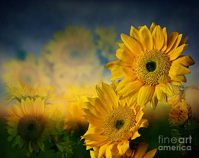Photograph - Sunflower Garden by Shirley Mangini