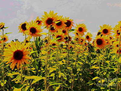 Photograph - Sunflower Gathering by Diane Miller