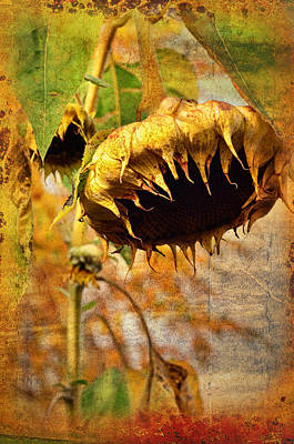 Sunflower Art Print by Gynt