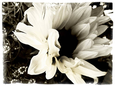 Photograph - Sunflower In Black And White 3 by Tanya Jacobson-Smith