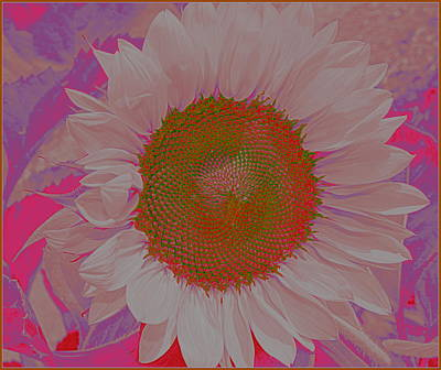 Sunflower In Pink And Purple Pop Art Art Print by Dora Sofia Caputo Photographic Art and Design