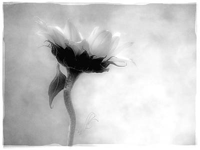 Print featuring the photograph Sunflower In Profile by Louise Kumpf