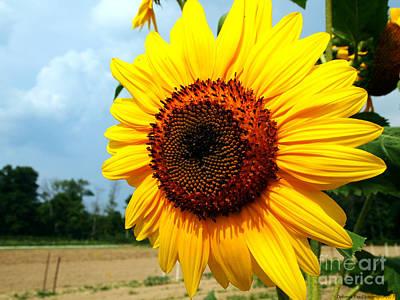 Sunflower In Summer Art Print by Deborah Fay