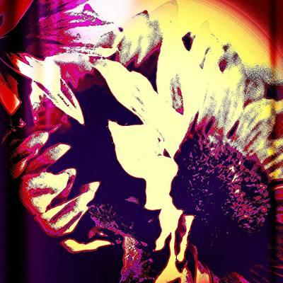 Botanical Photograph - Sunflower by Jason Michael Roust