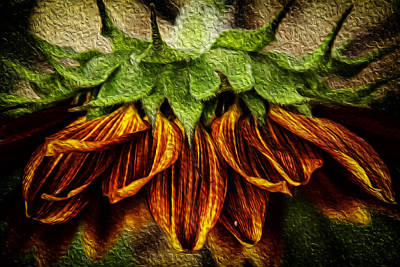 Digital Art - Sunflower by John Monteath