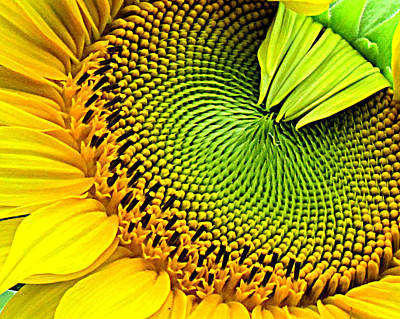 Sunflower Kaleidescope Art Print
