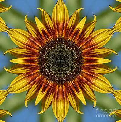 Sunflower Kaleidoscope Art Print by Cindi Ressler