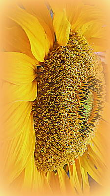 Photograph - Sunflower by Kay Novy