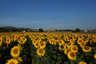 Provence Photograph - Sunflower Lanscape 1 by Susan Rovira