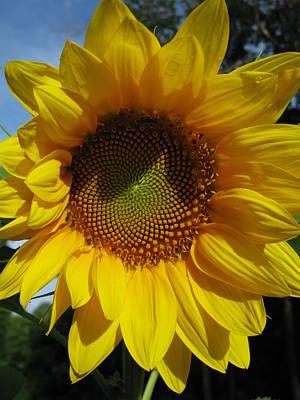 Sunflower  Art Print by Laura Corebello