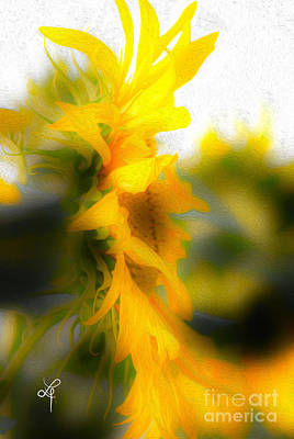 Photograph - Sunflower by Leo Symon