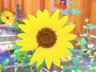 Photograph - Sunflower by Lisa Dunn