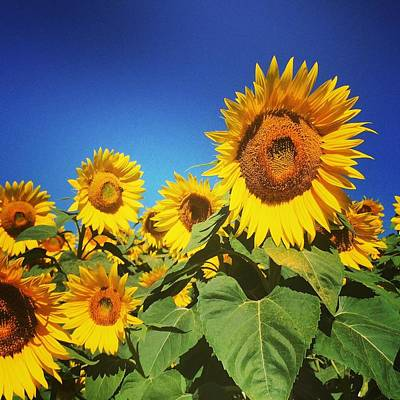 Photograph - Sunflower Love by Melissa Partridge