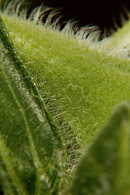 Photograph - Sunflower Macro 6 by Scott Hovind