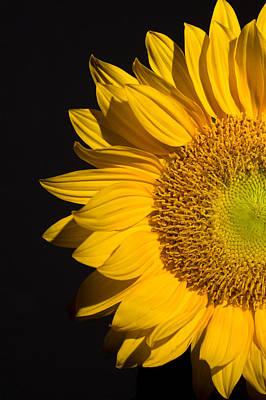 Still Life Digital Art - Sunflower by Mark Ashkenazi