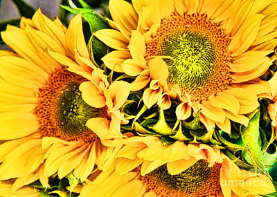 Photograph - Sunflower Me Up By Diana Sainz by Diana Raquel Sainz