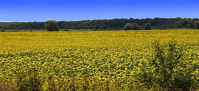 Photograph - Sunflower Meadow by Radoslav Nedelchev