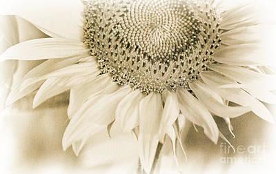 Photograph - Sunflower Monochrome by Kathleen K Parker