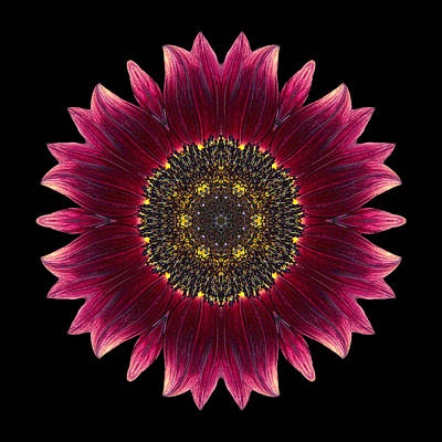Photograph - Sunflower Moulin Rouge I Flower Mandala by David J Bookbinder