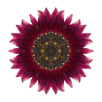 Photograph - Sunflower Moulin Rouge I Flower Mandala White by David J Bookbinder