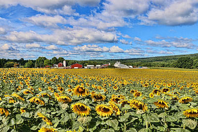 Photograph - Sunflower Nirvana 1 by Allen Beatty