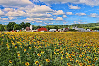 Photograph - Sunflower Nirvana 17 by Allen Beatty