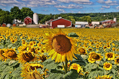 Photograph - Sunflower Nirvana 21 by Allen Beatty